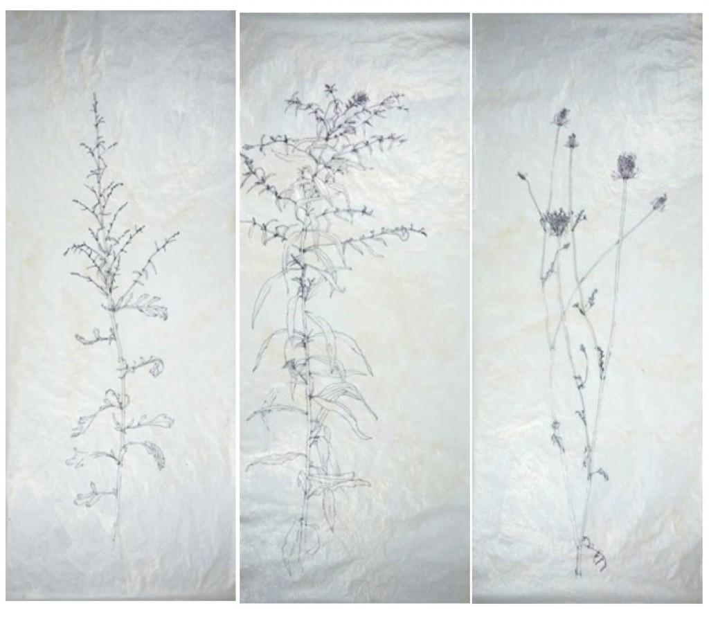 Roadside Weeds 1, 2, and 3        Liz Jeneid