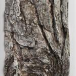 Paper Bark      Frankie Macaulay