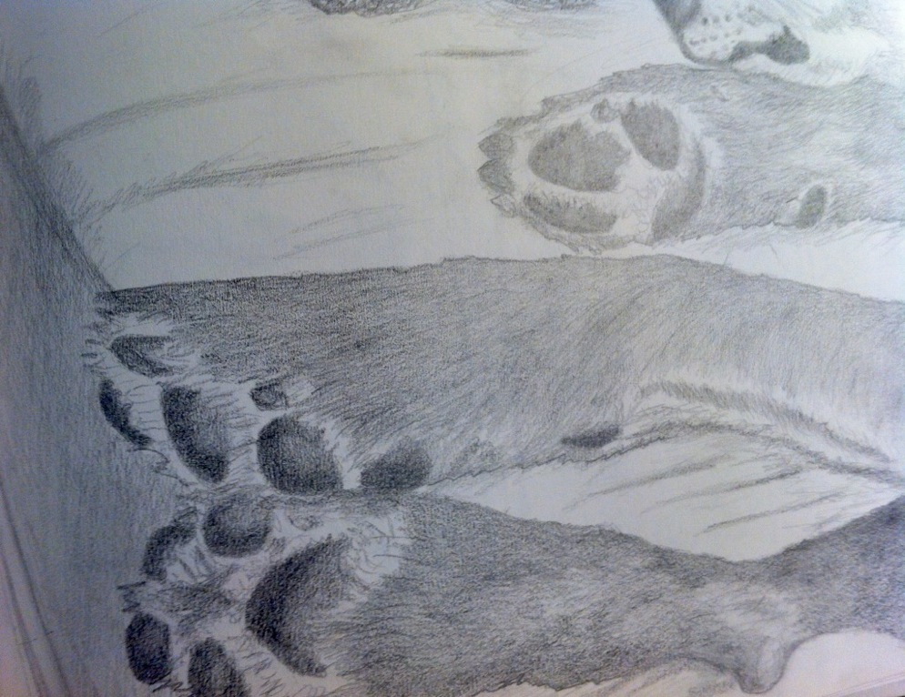 sketchbook Darwin's Feet