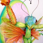PRAYING MANTIS IN LOVE (Detail)